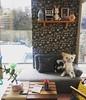 Inside my Miniio dollhouse (Tiina Vanhatupa) Tags: tiinacustom miniiodollhouse playscale dollhouse