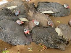 NIGER (112) (stevefenech) Tags: niger republic stephen fenech central north africa adventure travel tourism niamey