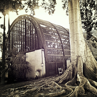 ( We'll meet by the big fig tree next to the botanical building )