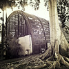 ( We'll meet by the big fig tree next to the botanical building ) (Wandering Dom) Tags: lattice botanical building architecture wood tree trunk fig roots nature life existence reality dreams being nothingness time roam wandering