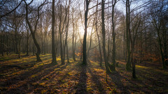 The lighting of the coppice... (Lee Harris Photography) Tags: light trees sunlight rays nature landscape serene tranquil silhouette contrast roddlesworth lancashire colourful outdoor shadow enchanted wood mist forest