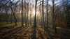 The lighting of the coppice... (L A H Photography) Tags: light trees sunlight rays nature landscape serene tranquil silhouette contrast roddlesworth lancashire colourful outdoor shadow enchanted wood mist forest