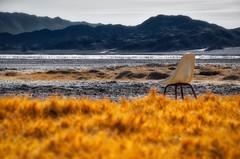 Is this seat taken? (Jason DM) Tags: nikon lost abandoned seat chair california mojave desert dry lake grass gold