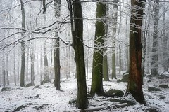 DSC04365 (BphotoR) Tags: snow forest woods bp bphotor winter trees germany