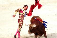 Intensidad (aficion2012) Tags: corrida bull fight bullfight toros toro taureau france francia tauromaquia tauromachie torero matador toreador arles juan bautista juanbautista faena muleta garcia jimenez paques 2017 izquierda