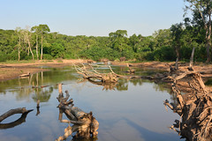 Elephants crossing the river in the Kyambura Gorge (supersky77) Tags: elefante elephant tropicalrainforest forest foresta africa uganda queenelizabethnationalpark qenp river