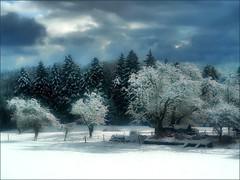 Sonne im Dunkel (almresi1) Tags: tree baum wald wood forest landscape welzheim althütte garten garden winter schnee snow sun clouds wolken sonnig nature germany