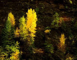 Forest Ledges