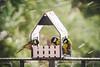 Mealtime! (Sebastian Bayer) Tags: schnee drausen essen süs vogel kohlmeise vogelfutter tier vogelhaus meise