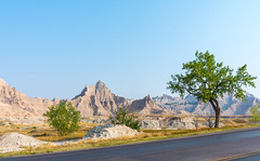 Green and alive in the Badlands (Pejasar) Tags: tree alive badlands nationalpark southdakota mountains dry stark road landscape nikon d7200 erosion