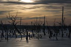Eiswald (IIIfbIII) Tags: lake see winter ice eis frost sonnenuntergang trees wald birke birch heaven himmel sky light mecklenburg vorpommern galenbeckersee nature canon landschaft landscape