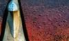 Ornamental (rickhanger) Tags: abstract chrome automotive automobile vehicle ornament hoodornament hood raindrops car rust rusty