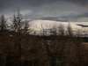 Larch Trees and the Hill - Dunoon Dec 2017 (GOR44Photographic@Gmail.com) Tags: thebishopsseat cowal scotland argyll dunoon gor44 trees larch snow winter white g2 panasonic 45150mm