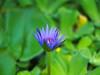 P8020317 (Asansvarld) Tags: botanical botaniskträdgård trädgårdsföreningen göteborg gothenburg summer sommar olympusomdem5 microfourthirds manuallens manuelltfoto