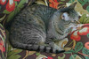 Key West (Florida) Trip 2017 7226Ri 4x6b (edgarandron - Busy!) Tags: florida keys floridakeys keywest coco cat cats kitty kitties tabby tabbies