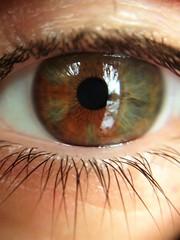 Speckled (Espykrelle) Tags: macro macromondays speckled eye œil explore tacheté monday lundi green greeneye orange vert oeilvert hmm 7dwf closeup sundaylights