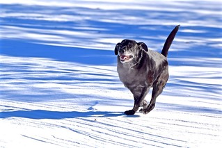 SNOW RUNNER, ACA PHOTO