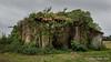 When nature takes over... (Ivan van Nek) Tags: moncorneilgrazan gers france 32 nikon nikond7200 d7200 frankreich frankrijk ruraldecay abandoned