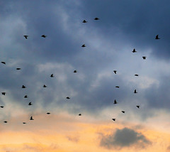 The name of the birds (Robyn Hooz) Tags: autunno fall uccelli birds padova italia migranti nuvole clouds colori away knowledge conoscenza