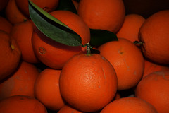 Cara Cara (oybay©) Tags: orange oranges fruit arizona 2018winter 2018 winter harvest tree enmasse color colors caracara cara