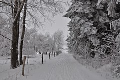 Winter im Februar (Uli He - Fotofee) Tags: ulrike ulrikehe uli ulihe ulrikehergert hergert nikon nikond90 fotofee eis schnee winter februar winterlandschaft winterwald winterbäume reif rauhreif gersfeld wasserkuppe eube wachtküppel guckaisee