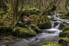 _ATP3997 (anahí tomillo) Tags: nikond7500 nikon naturaleza nature bosque woods agua water sigma 1750f28 rio river seda verde green
