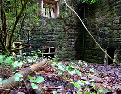 When The Undergrowth Flourishes. Jan 2018 (SimonHX100v) Tags: shiningcliffwoods ambergate derbyshire derelict urban decay ruins ruin abandoned untidy depressed dereliction neglected deserted desolate broken damaged ruined shattered moss damp graffiti perspective pointofview lowpov pov depthoffield dof leadinglines unitedkingdom uk england english greatbritain gb britain british eastmidlands urbex january january2018 winter winter2018 outdoor outdoors outside simonhx100v sonydschx100v sonyhx100v hx100v sonycybershotdschx100v