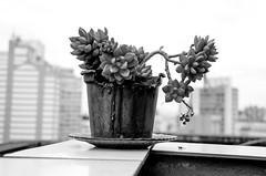 Foto-Arô Ribeiro-1985 (Arô Ribeiro) Tags: street cidade sãopaulo brazil fineart meioambiente natureza photography laphotographie blackwhitephotos blackandwhite bw pb arôribeiro nikond7000 thebestofnikon nikon