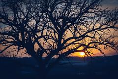 Sunset HDR (Elowi) Tags: tree baum branch ast branches äste himmel sky sunset sonnenuntergang sunsetwalk sundown colors farben sun sonne gelb yellow light dark hell dunkel wolken clouds nature natur landscape landschaft contrast kontrast sony sonyalpha alpha6000 alpha selp18105g dämmerung dusk