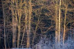 Wunderbarer Wintermorgen im Wald (LENS.ART Photographie) Tags: winternatur landschaft landscape germany north snow trees wood schnee wald weis bäume d7200 nikon buchenwald norddeutschland niedersachsen sonnenaufgang sonnenlicht