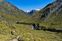 Snowy Creek gorge, 2018 (NettyA) Tags: mtaspiringnationalpark nz newzealand reesdartcircuit southisland day2 tramp tramping hike hiking reesdarttrack snowycreek