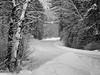 Winter Road (maureen.elliott) Tags: 7dwf landscape winter road snow nature trees algonquinpark outdoors blackandwhite driving opeongoroad travelling