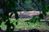 Casi confuso (Melophoto) Tags: costarica melophoto melvinramírez aborigen antepasados fotografía guayabo herencia historia legado monumento