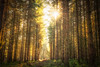 Fernworthy Forest (Rich Walker75) Tags: fernworthyforest dartmoor devon forest trees tree woodland woods landscapes landscapephotography landscape greatbritain england canon efs1585mmisusm eos100d eos