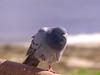 Time to Rest (npbiffar) Tags: bird sky pigeon water seashore grey npbiffar fz200 lumix panasonic