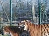 100_0157 (kevinrayworth) Tags: blackpoolzoo blackpool zoo