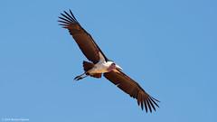 Samburu National Reserve, Kenya (mortenekstrøm) Tags: samburu kenya