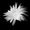 snOw wHIte! (m_laRs_k) Tags: bw lightroomed olympus omd noir schwarzweiss 7dwf monochrome monotone