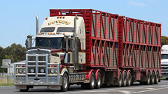 KENWORTH STOCK ~ Boyle's (Jungle Jack Movements (ferroequinologist)) Tags: kenworth nose cummins signature melbourne geelong allansford vic victoria princes freeway stock livestock boyles truck tractor prime mover diesel injected motor engine driver cab cabin fast brake wheel exhaust loud rumble beast hood hp horsepower gear oil haul haulage freight cabover trucker drive transport carry delivery bulk lorry hgv wagon road highway semi trailer double b deliver cargo interstate articulated vehicle load freighter ship move roll power grunt teamster boyle