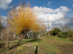 Willow (Elise de Korte) Tags: fr france frankrijk ldf lafrance arbre arbres bomen boom campagne cloud clouds country hiver platteland tree trees wilg wilgen willow willows winter wolk wolken