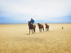 171230 Guide, His Horses, and His Dog (Fob) Tags: december 2017 mexico baja bajacaliforniasur travel trip ranchopescadero beach people horses