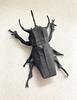Atlas Beetle 2.0 (日輪富 Philogami) Tags: origami philogami philippmarius kost atlas beetle 20 insect origamido paper art folding