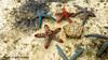 BlueSafari-Watamu-Kenya (5) (johnfranky_t) Tags: stelle marine acqua mare watamu kenya africa colori johnfranky t panasonic tz40