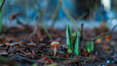 Voigtländer Nokton Classic SC 40 mm f/ 1.4 - DSCF6853 (::Lens a Lot::) Tags: paris 2018 classic prime lens profondeur de champ effet fungus mushroom macro bois oiseau animal arbre flou bokeh depth field color night public light rose green yellow orange blue red pink purple vintage manual ciel german voigtländer nokton sc 40 mm f 14 2010s | 10 blades aperture leica m