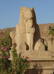 Ram (or Goat?!) Sphinx, Karnak Temple (Aidan McRae Thomson) Tags: karnak temple luxor egypt ancient egyptian ram statue sphinx sculpture