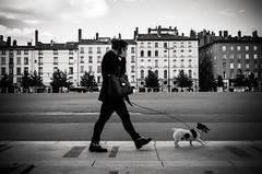 In motion (damar47) Tags: pentax pentaxart pentaxian pentaxk30 streetphotography streetstyle streetlife street inmotion stranger dog doggy lyon lione france citylife citycentre urban blackwhite blackandwhite biancoenero monochrome monochromatic