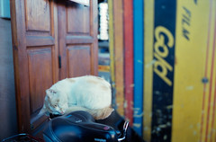 Kodak Cat (AnniversaryRoad) Tags: 135 35mm 400 400asa 400iso 50mm africa arab kodak kodakportra leica leicam6 leitz m6 marrakech marrakesh moroccan morocco portra portra400 summicron analog analogphotography analogue animal cat color colour desert feline film filmgrain filmphotography medina motorcycle outdoor outdoors outside portrait rangefinder sky sleeping souk souq street streetphotography traditional