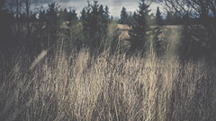 PB_012618_09 (losing.today) Tags: brianyoung oregon pacificnorthwest portland pdx portlandoregon portlandor winter nature outdoors naturepark plantlife plants moodyseason darkseason losingtoday grass grassstudies