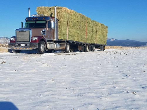 Hauling hay in northern California