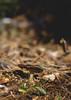 Little mushroom (sotirisdimi) Tags: parnitha greece snow mountain deer mushroom